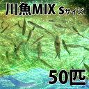 【生餌】川魚ミックス S 50匹 エサ 餌用川魚 餌 淡水魚 川魚 【2点以上5000円以上ご購入で