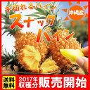 ※2017年収穫分 販売開始!!【2480円(税込)×送料無料!!】沖縄県産♪スナックパイン[約2kg