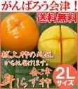 【送料無料】2016年 会津御山産 会津みしらず柿 【 2Lサイズ 5kg 】 約20玉 約5キロ【P25Jan15】