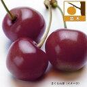 【ラッキーシール対応】果樹の苗/サクランボ:アメリカンチェリー4号ポット