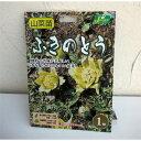 野菜の苗/野菜球根パック:ふきのとう(フキ・蕗)1株