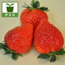 野菜の苗/イチゴ:とちおとめ3号ポット12株セット