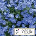 草花の苗/エボルブルス(枝咲き):ブルーシエル3.5号ポット...