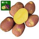 野菜の苗/ジャガイモ:インカのひとみ300g入り