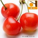 果樹の苗/サクランボ:紅さやか4〜5号ポット
