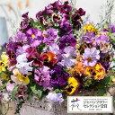 草花の苗/パンジー:ムーランフリルルージュミックス3.5号ポット3株セット