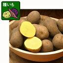 野菜の苗/ジャガイモの種いも:インカのめざめ300g入り