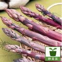 野菜の苗/アスパラガス:パープルジャンボ(紫アスパラ)養生株3.5号ポット4株セット
