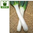 野菜の苗/ネギ苗:下仁田ねぎ2.5〜3号ポット4株セット