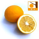 果樹の苗/レモン:マイヤーレモン4〜5号ポット