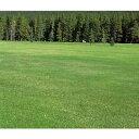 芝の種:ケンタッキーブルーグラス サドンインパクト1kg
