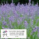 ハーブの苗/耐暑性ラベンダー:長崎ラベンダー城南1号3号ポット2株セット