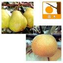 果樹の苗/ナシ(梨)2種セット:ラフランスと幸水(コウスイ)4〜5号ポット