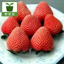 野菜の苗/イチゴ:とうくん(桃薫)3号ポット3株セット