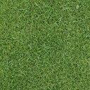 芝の種:ケンタッキーブルーグラスブルーノート1kg 暑さに強く日陰にも向く タネ 40平米分