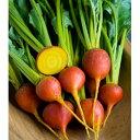 [野菜タネ]ビーツ:サフランイエローの種