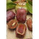 【ラッキーシール対応】果樹の苗/極甘サルナシ:紫香(しこう)4号ポット