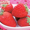 野菜の苗/イチゴ:ドルチェベリー3号ポット