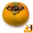 果樹の苗/カキ(柿):たいしゅう(太秋)4〜5号ポット[大果の完全甘柿・11月上旬収穫の人気品種]