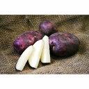 野菜の苗/[1月下旬頃~]ジャガイモ:タワラムラサキ500g