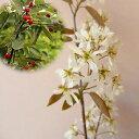 花木 庭木の苗/ジューンベリー:バレリーナ4〜5号ポット