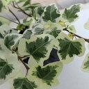観葉植物 / ヘデラ:へリックス雪ほたる3号ポット苗 2株セット