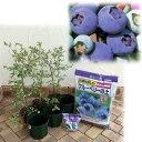 果樹の苗/ブルーベリー暖地・一般地向き3種栽培セット