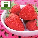 野菜の苗/イチゴ:ドルチェベリー3号ポット12株セット