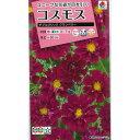 [タキイ 花タネ]コスモス:ダブルクリック クランベリーの種