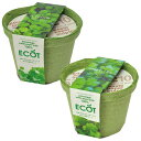 エコット(S):クレソン栽培セット&パクチー栽培セット