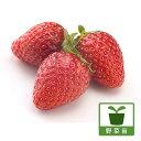 野菜の苗/イチゴ:ほうこうわせ(宝交早生)3号ポット3株セット
