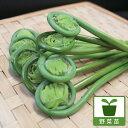 野菜の苗/ゼンマイ3.5号ポット