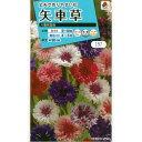 矢車草(ヤグルマギク・セントーレア) 八重咲混合[タキイ 花...