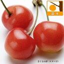 果樹の苗/サクランボ:さおり4〜5号ポット