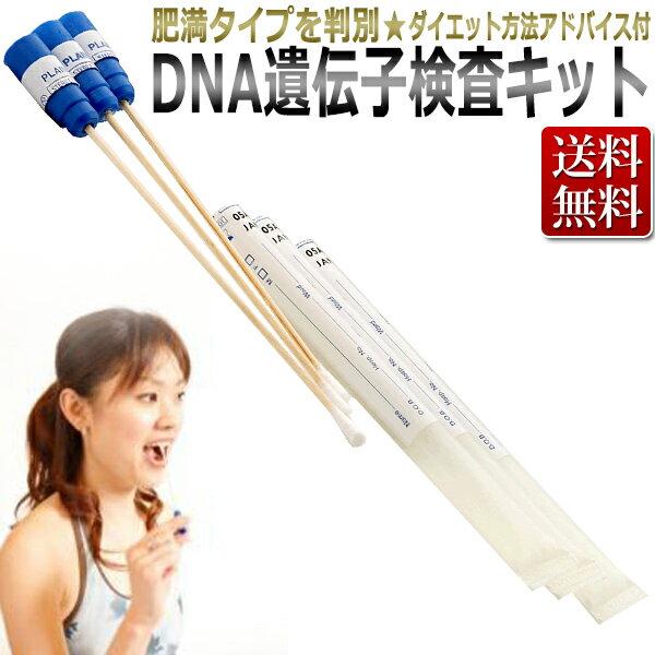 DNA 遺伝子検査キット/epier DNA予防美容 肥満タイプを判別【RCP】02P03Sep16