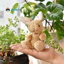 Jellycat POPPET caramel Bunny Baby ジェリーキャット ポペット キャラメルバニー 正規輸入代理店 輸入品 東京 原宿 正規品 取り扱い店舗 エトフ