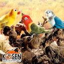 KOESEN ケーセン社 ボタンインコ?ドイツ・KOESEN/KOSEN(ケーセン社)の動物のぬいぐるみ。愛らしい表情のインコのぬいぐるみです。出産祝い クリスマス プレゼント 結婚記念日 出産したママへのご褒美にもおすすめ