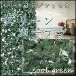 【送料無料】☆グリーンカーテン/グリーンフェンス☆サイズ1.5m×3m(日除け・日よけ・リーフラティス グリーンシェード サンシェード アイビー 目隠し 葉 ガーデン)【0301楽天カード分割】05P19Dec15【RCP】