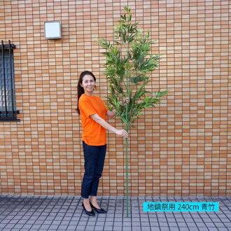 真正的竹竿,竹竿 (200 釐米) 的破土儀式