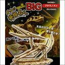 恐竜を発掘して組立セット 全長約40cm プテラノドン