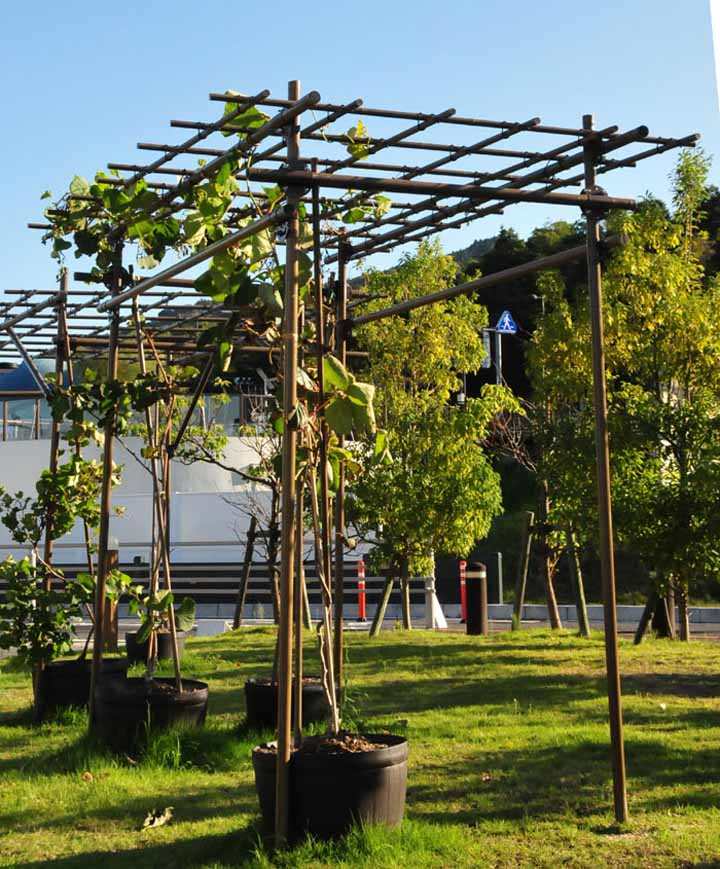 フルーツパーゴラ L 幅2.4m×高さ2.0m×奥行1.2m 積水樹脂 【藤棚 ふじだな 葡萄 ぶどう つる 薔薇 バラ 植物 ガーデニング 棚 蔓性植物 屋根 庭園 庭 ガーデン日陰棚 ひかげだな つる棚 緑廊】