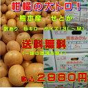 柑橘の大トロ!熊本産 せとか訳あり5キロ サイズ(3L〜M)【送料無料】一部の地域を除く