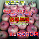 青森産 【葉とらず】サンふじりんご10キロ(40・46玉)【送料無料】