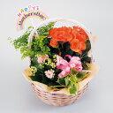 お花の寄せカゴナチュラルアレンジバスケット【母の日寄せカゴアレンジ2018ギフトプレゼント鉢花】