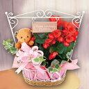 お花の寄せカゴウッドプレートバスケット【母の日寄せカゴアレンジ2018ギフトプレゼント鉢花】