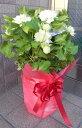 母の日や誕生日などに 八重咲きクレマチス エジンバラ 八重の...