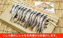 Ka201-A006【ふるさと納税】本場くしろ産 ししゃもオ...