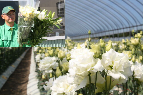 【ふるさと納税】由仁のお花セット 由仁産の花束をお届けします!全国有数の産地であるトルコキキョウをはじめ、やや大輪(1cm程度)の純白色のカスミ草、白色やピンク色のユリを交えた花束をお届けします。