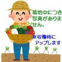 【ふるさと納税】伊藤農園の秋掘り有機長いも(令和2年1月下旬...