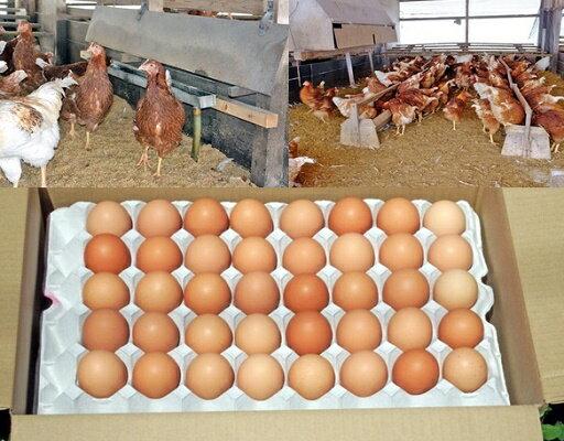 【ふるさと納税】ユニファームの平飼い有精卵(160個)